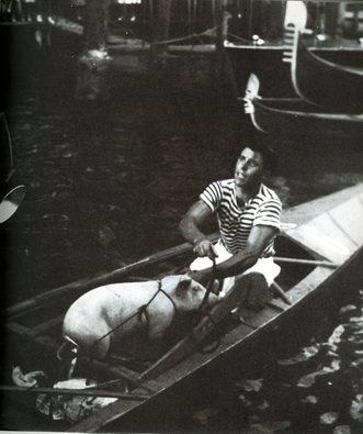 """1956 Ermenegildo Fravega """"Scardola"""" si porta via in barca il maialino, """"premio di consolazione"""" per l'equipaggio quarto classificato"""