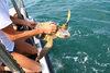 22.06.2014 – Turtle day al Lido di Venezia con la liberazione della tartaruga Alcione II